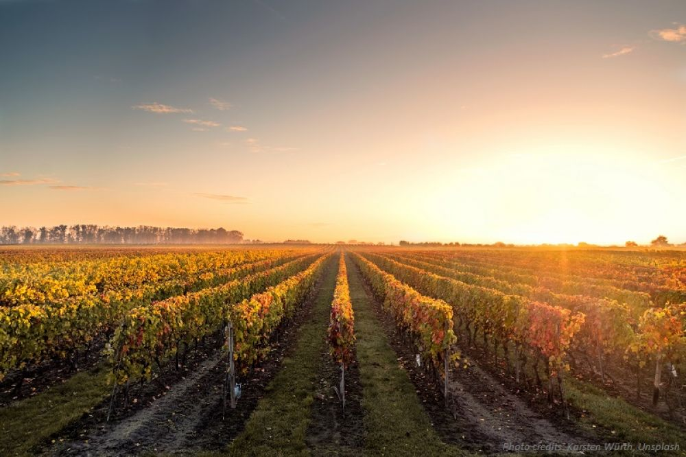 Wine Tourism: high on the agenda for the whole wine sector